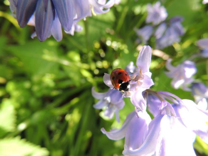 ladybird-449333_1920