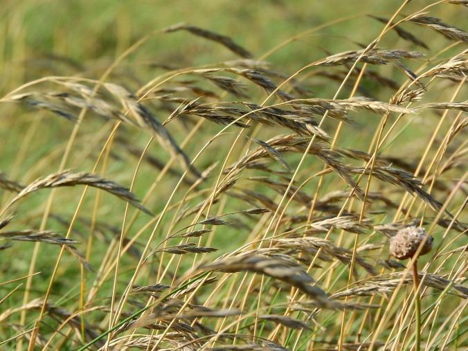 blades-of-grass-1008461_1920