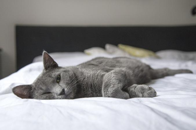 cat-1818927_1920