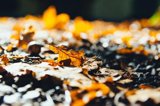 leaves-2812461_1920