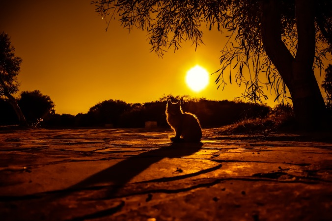 sunset-3019965_1920