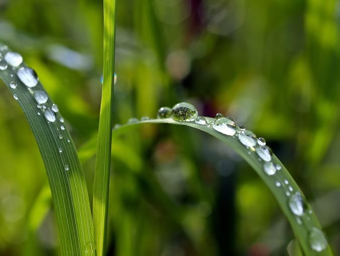 grass-1331703_1920